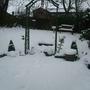 The snow, December 2010