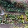 100 1923 my garden