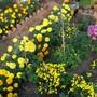 garden foto
