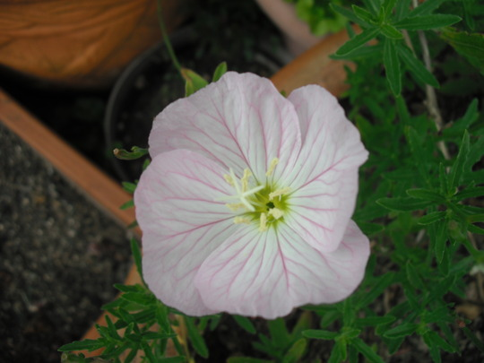 Aunty Beryl's Garden (2)