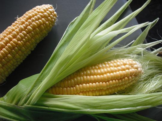 Mum's homegrown corn... YUMMMMMMMMMMMMMMM!  (Zea mays)