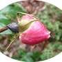 Img_9463_brave_rosebud