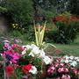 mary_garden_062.jpg
