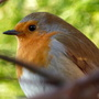 My new friend Robin, another pic for Shirley