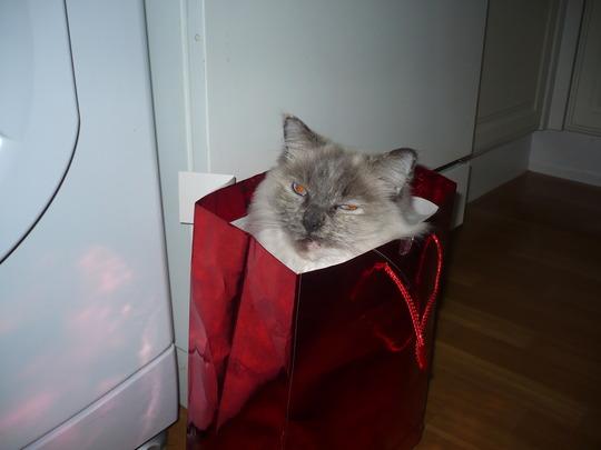 Bag Puss !
