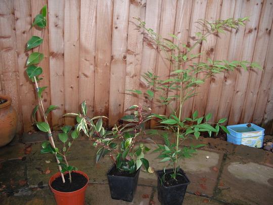 Cheap New Ebay Plants