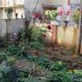 100 2067 my garden 2011