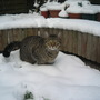 Spike in the snow.