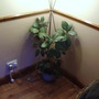 houseplant gone mad
