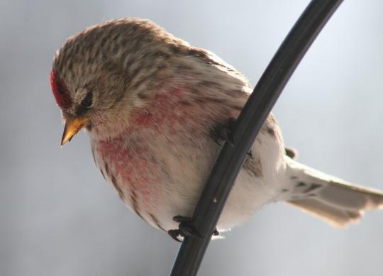 09 02 27 birds05 50