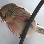 09_02_27_birds05_50