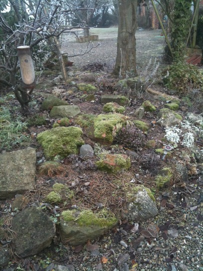 another look (dry rockery area)