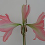3 of the flowers