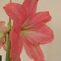 Flower other side.