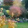 Our garden in the autumn 2010