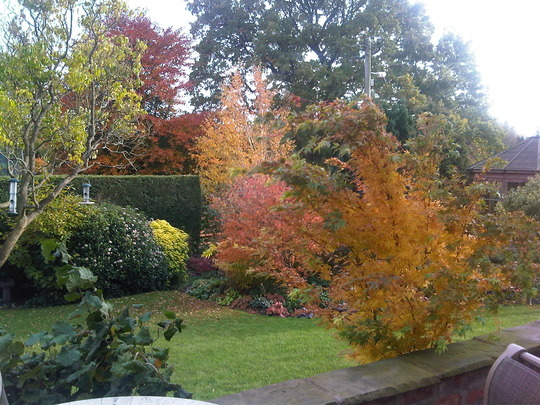 More of the garden in autumn 2010