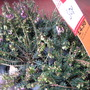 50 pence for 6 heathers today at B&Q