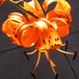 Tiger_lily_top_view