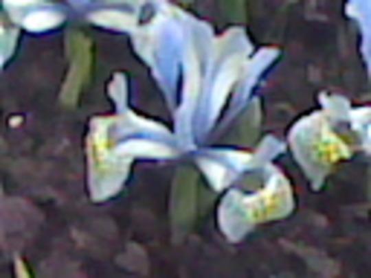 flower close up 3 Copy11