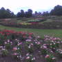 Tollcross rose garden2009 Copy 2
