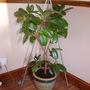 happy plant now :)