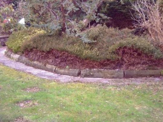 Badly pruned heather