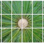 Cycas... edited (Cycas revoluta (Japanese Fern Palm))