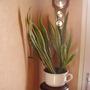 Hallway plant