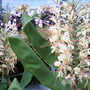 Stunning blooms...