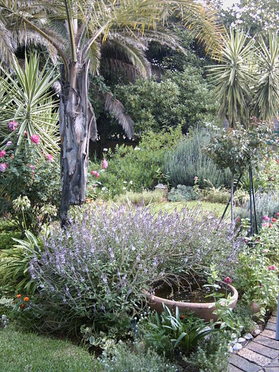 My South African garden....