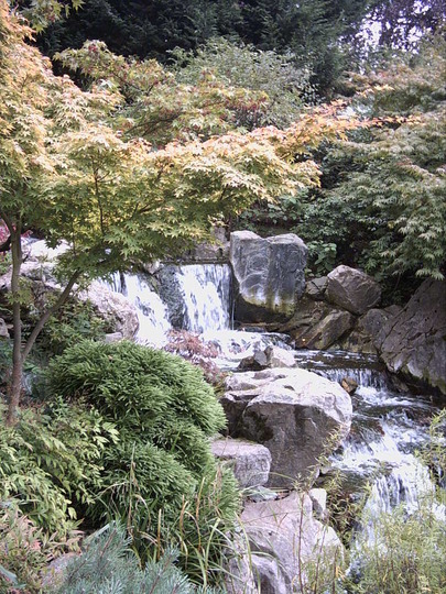 Serene Japanese acers ...