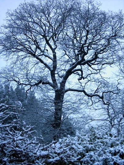 Eltham Winter Magic
