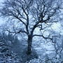 Eltham_winter_magic