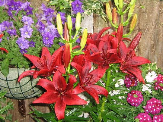 garden july 2010 001