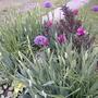 2008_05_29_may_rock_garden