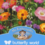 Butterfly world mix (Multiple varieties)