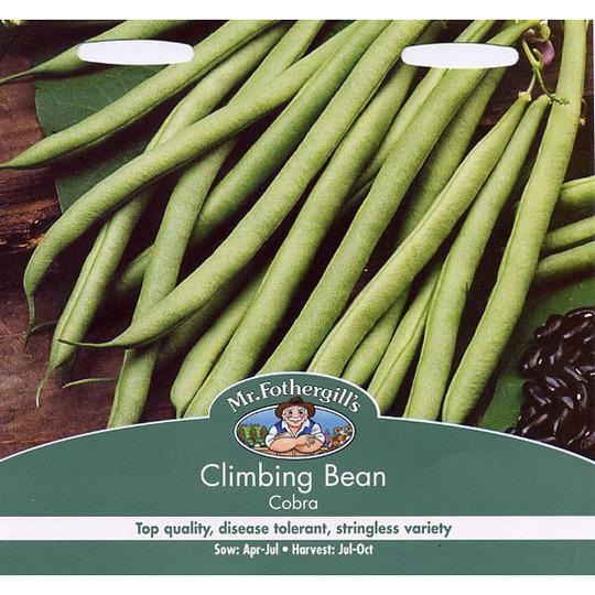 French Beans (Phaseolus vulgaris (Climbing French bean))