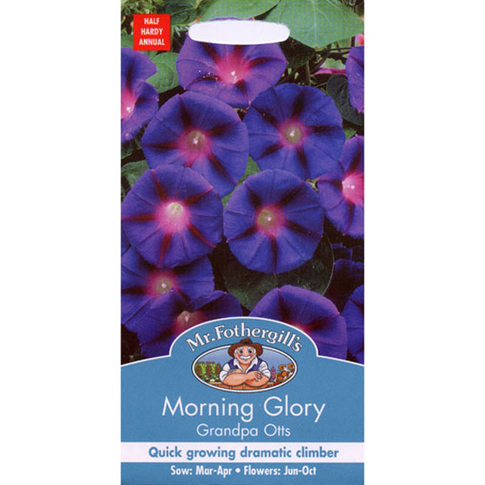 Morning Glory Grandpa Otts 600 (Ipomoea purpurea (Morning glory))