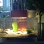 New fish tank!