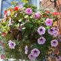 Garden_july_21_10_003