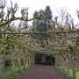 Pruning of Lime Tree Avenue Completed