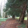 The Old Coach Track Flanked By 200 Year Old Yew Trees
