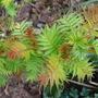 Panasonic_22_february_2011_023