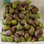 Figs (fig)