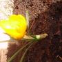 my first spring bloom