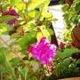 Garden_2007_042