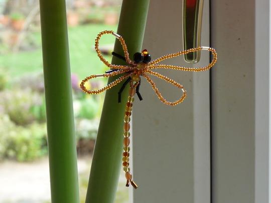 Golden Dragonfly (Amaryllis hippeastrum)