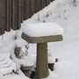 Feb.27/11 Bird Bath