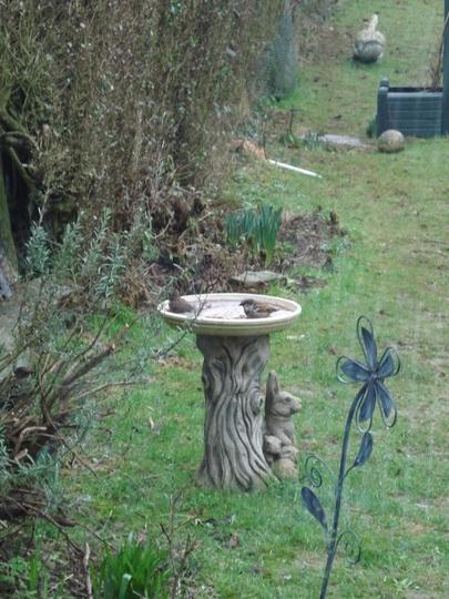 Sparrows having a bath