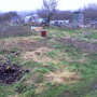 Allotment Feb 2011